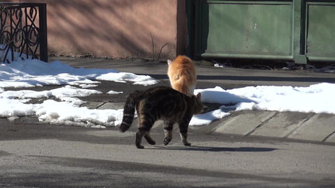 Two cats pass a paved street heading towards a gate closed 99a Footage