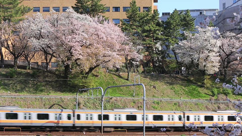 A city with cherry blossoms Archivo