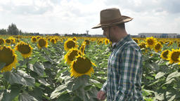 Thumb up happy farmer putting his hat on the sunflower ビデオ