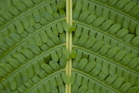 Texture of fern leaf close-up Fotografía