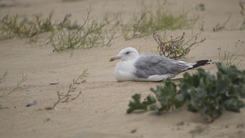 Seagul Bird on the Sand ビデオ