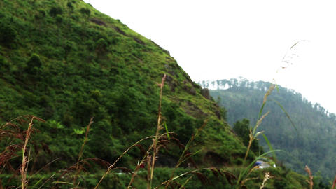 Clouds pass over mountains.Green hillside with trees in cloud scraps. Moving fog Live Action