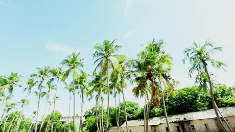 Pan Right Indoor Sports Complex Exterior, nature background and Coconut Trees Footage
