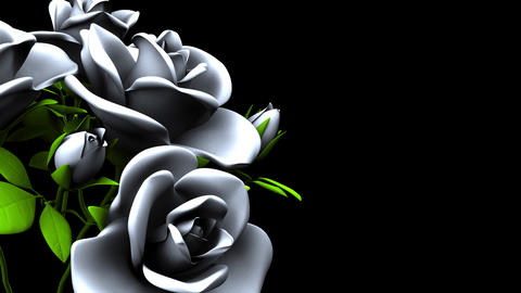 White Roses Bouquet on Black Text Space CG動画