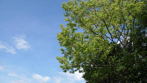 青空と風になびく木 ビデオ