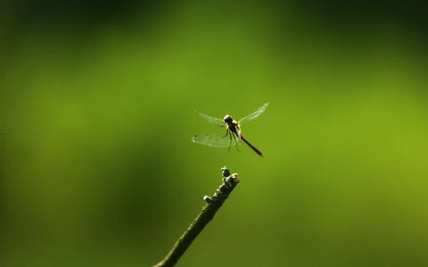Dragon Fly In Ultra Slow Motion Live Action