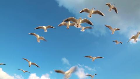 Seagulls flying Footage