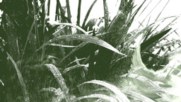 Closeup on a plant under rain with droplets in a double exposure effect with ink Footage