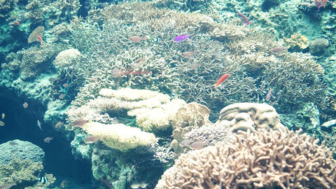 海、海中、海水魚、熱帯魚、沖縄、サンゴ礁、珊瑚、南の島、ダイビング、シュノーケル、シュノーケリング、ゴーグル、夏休み、エメラルド、グリーン、コバルト、ブルー、太 GIF