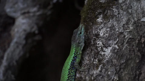 Green lizard sits on a tree trunk close up GIF