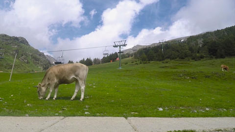 Cow Eats Grass Near Unused Chairlifts GIF