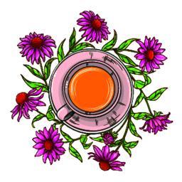 echinacea tea illustration ベクター
