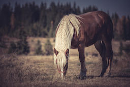 Horse in the meadow フォト