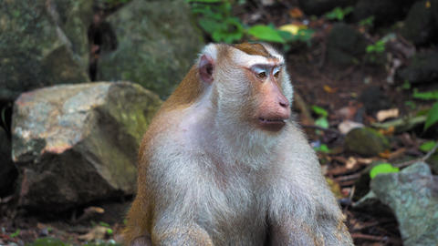 monkey in the rainforest on the rocks Footage
