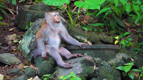An adult monkey sits in the shade of a rainforest tree.... Stock Video Footage