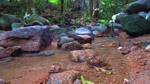 mountain stream in a beautiful forest. fresh pure mountain water. beautiful Footage