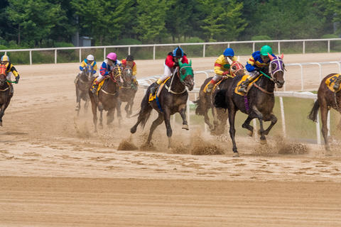 Gwacheon Racing Park, running horse フォト