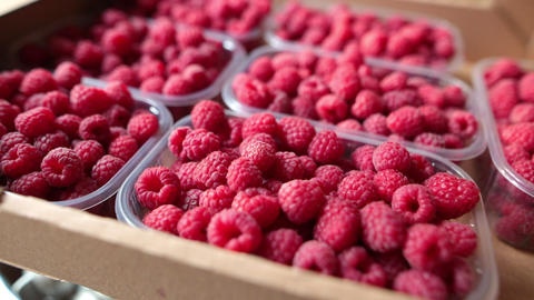 Juicy organic raspberries in plastic boxes inside a cardboard box. Selective Footage
