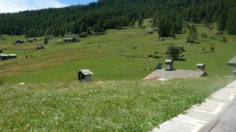 Alpine pasture in Valtellina Footage
