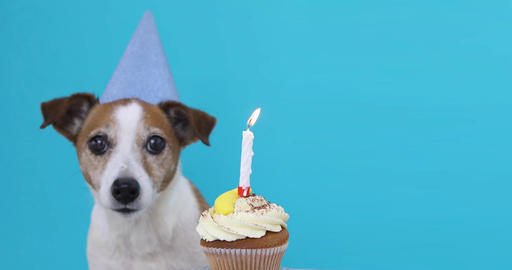 Cute dog with party hat and birthday cake Fotografía