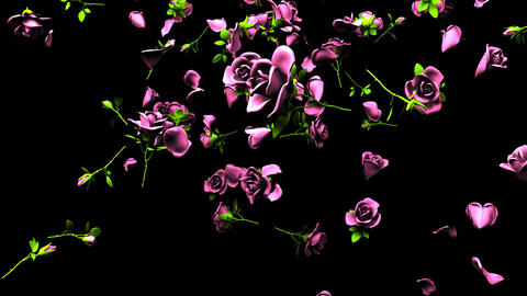 Falling Pink Roses On Black Background Animation