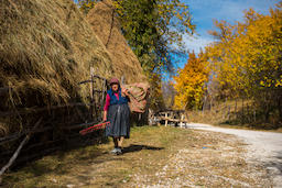 Old woman carrying hay for animals フォト