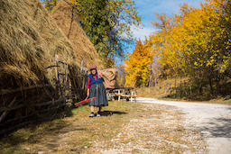Old woman carrying hay for animals Photo