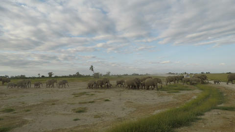 elephants in kenya Footage