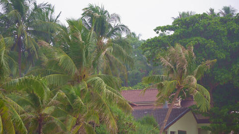 coconut palms next to the house GIF