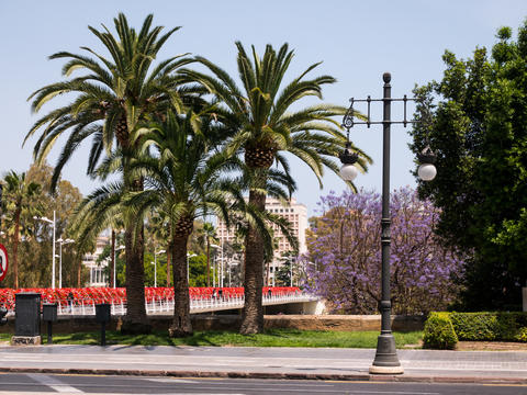 palm trees near a main road in Valencia, spain Fotografía