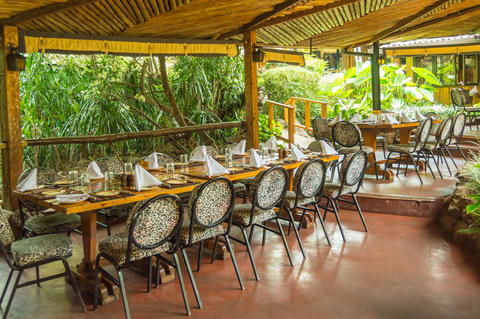 Table set on a jungle-colored terrace in a tropical environment フォト