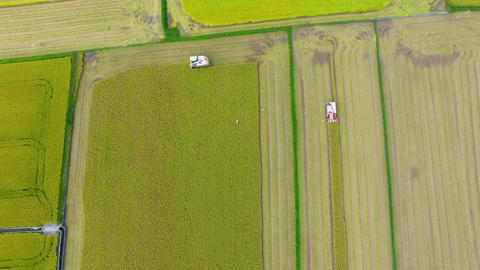 aerial view of Combine harvester machine with rice farm Live影片
