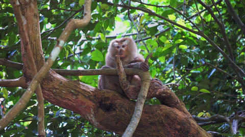 monkey sits on a tree branch in the jungle Footage