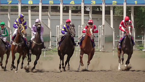 Starting Horse Racing. Slow Motion GIF