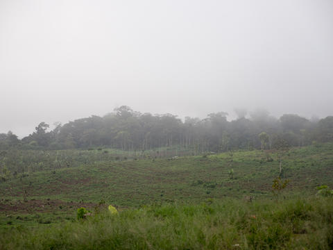 Farmland in the mountains in the cloud. Bali,Indonesia Photo