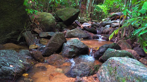 mountain creek in the forest GIF