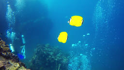 pair of fish swimming in the reef Footage