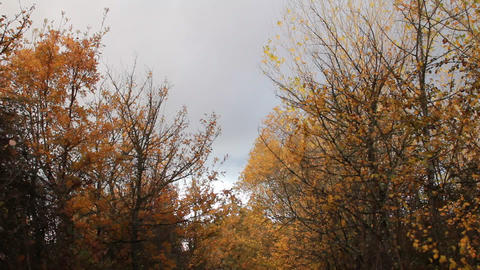 Autumn in the Spanish countryside Stock Video Footage
