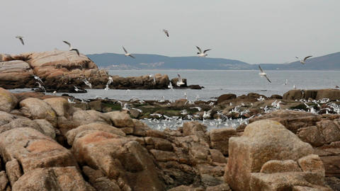 Seagulls flying near the sea, looking for food Stock Video Footage