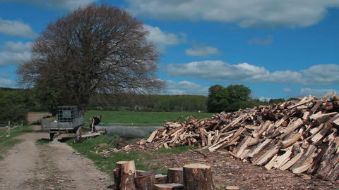 Tree and cut wood Stock Video Footage