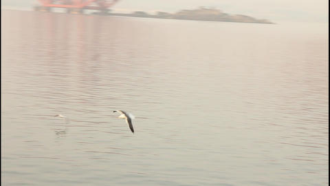 Seagull Flying Skimming The Sea – Slow Motion stock footage