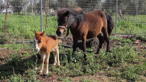 A little pony with his mother in the south of Ital Stock Video Footage