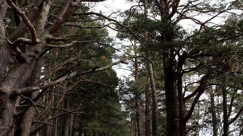 Walking footpath in the woods Stock Video Footage