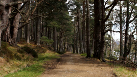 Walking footpath in the woods Stock Video Footage