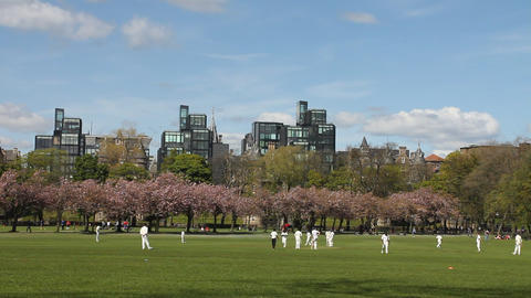 People playing a cricket match in the park Stock Video Footage