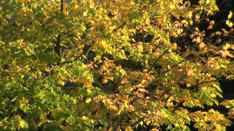 Trees In Wind - Bäume Im Wind stock footage