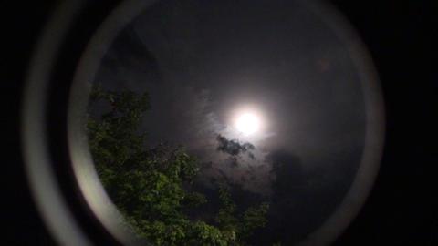 moon trees Mond Bäume Stock Video Footage