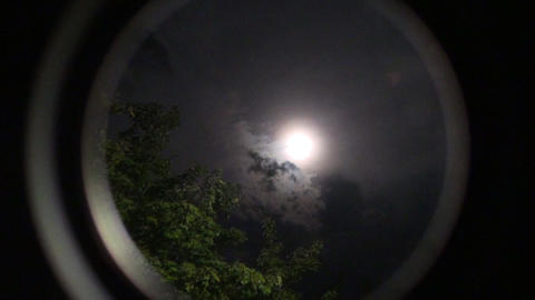 moon trees Mond Bäume Stock Video Footage