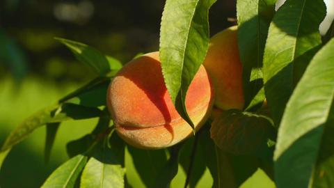peaches closeup 2 Animation