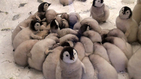 Stuffed bird Stock Video Footage